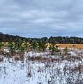 Old Farm Field Li.ny by Terry McCarrick