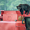 Farmer Bear 8819 by Dan Beauvais