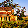 Farmhouse On A Landscape, Imbler, Union by Panoramic Images