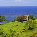 Farmhouse-st Lucia by Chester Williams