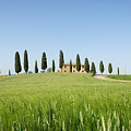Farmhouse With Cypress Trees And Crops In Tuscany by IPics Photography