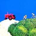 Farming On Broccoli And Cauliflower II by Paul Ge