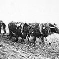 Farming: Ploughing, C1930 by Granger