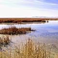 Farmington Bay View by David King