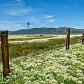 Farmland Scenery by Dianne Phelps