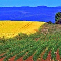 Farmlands Of The Willamette Valley by Margaret Hood