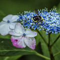 Fast Food For Bumblebees by Belinda Greb