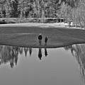 Father And Son Reflected by Priya Ghose