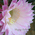 Fathers Day Cactus by Marna Edwards Flavell