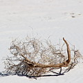 Faux Scorpion In White Sands by Colleen Cornelius