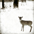 Fawn In The Snow by Allan Janus