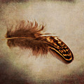 Feather 4 by Kevin O'Hare