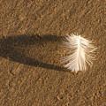 Feather Arch by Liza Eckardt