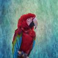 Feathered Friend by Kim Hojnacki