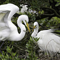 Feathering Their Nest by Fran Gallogly