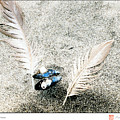 Feathers And Mussel by Michelle Bush