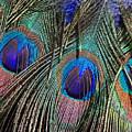Feathers by Elizabeth Hoskinson