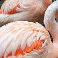 Feathers Of Flamingo by Lkb Art And Photography