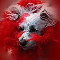 Feathers Of Red by Lori Mahaffey