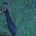 Feathery Fan by Koni Webb Bosch