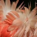 Featherz by Toma Caul