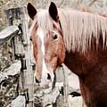 February Horse Portrait by Rachel Morrison