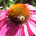 Feeding Off The Flower by Laura Birr Brown
