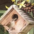 Feeding Birds by Barbara S Nickerson