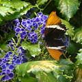 Feeding Butterfly by Allen Meyer