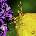 Feeding Butterfly by Jay Stockhaus