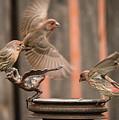 Feeding Finches by Tim Kathka