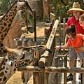 Feeding Giraffe 2 by Michael Gordon