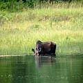 Feeding Moose by Sherman Perry