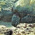 Feeding Sea Turtle by Michael Peychich