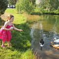 Feeding The Ducks by Daneille Kitchel