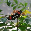 Feeding Time - Butterfly by Lynn Michelle