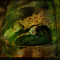 Feeling Froggy by Julie Thies