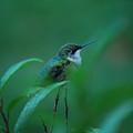 Feeling Green by Lori Tambakis