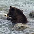 Feasting Bear by Richard J Cassato
