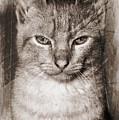 Feline by Clare Bevan