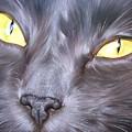 Feline Face 1 by Elena Kolotusha