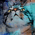 Feline Focus by Kathy M Krause
