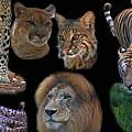 Feline Montage by Larry Linton