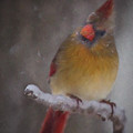 Female Cardinal In The Winter by Lana Trussell