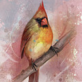 Female Cardinal by Steve Goad