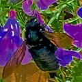 Female Carpenter Bee On Penstemons by Scott L Holtslander