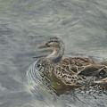Female Duck by Edmund Price