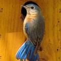 Female Eastern Bluebird 7 by James Seitzinger