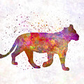 Female Lion 01 In Watercolor by Pablo Romero