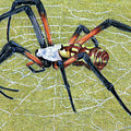 Female Orb Spider -1 by Beverly Fuqua